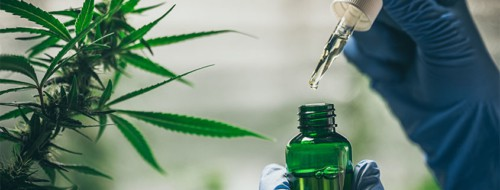 a scientist extracting cbd oil from cannabis vial